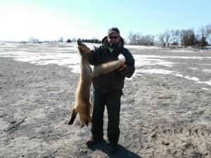 guided predator hunts