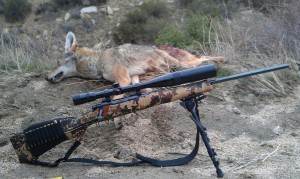 Coyote rifle